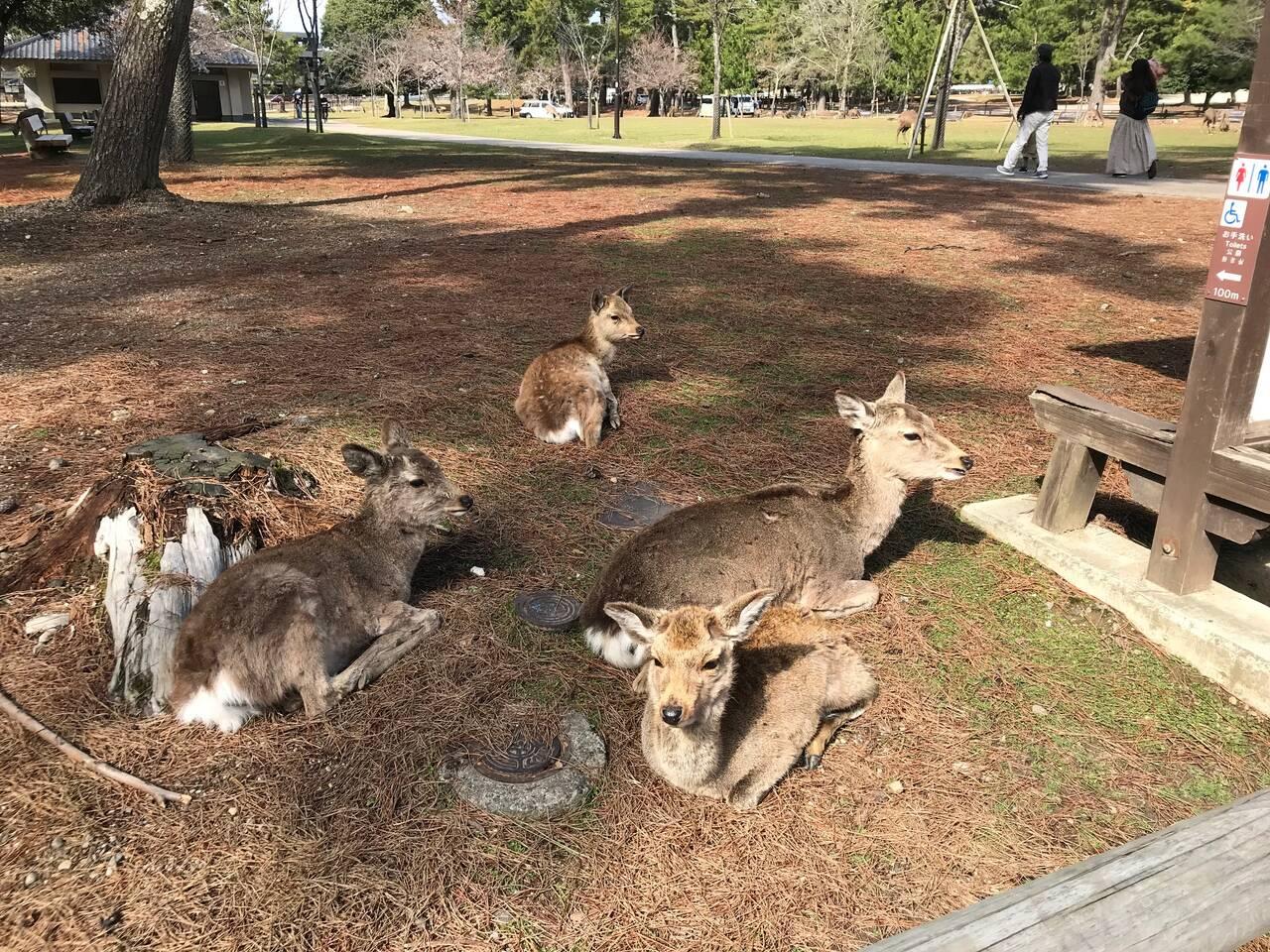 Deers in Kofukuji Park